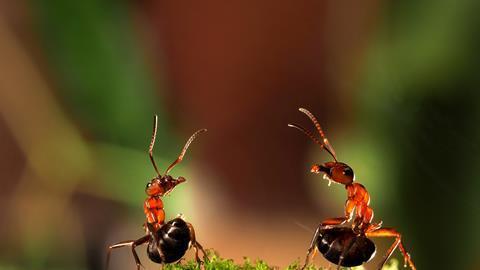 خرید جوهر مورچه